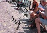 等待餵食的小鳥。