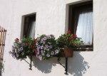 家花,奧地利小屋外。
