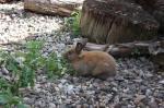 笨兔,廠。