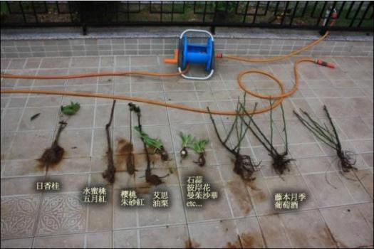 淘宝植物苗