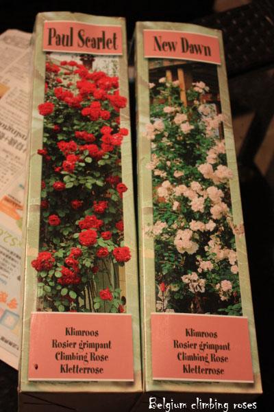 Belgium climbing roses