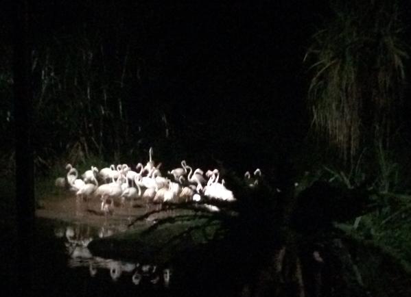 Night Safari crane